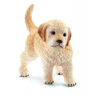 Chó Golden Retriever con