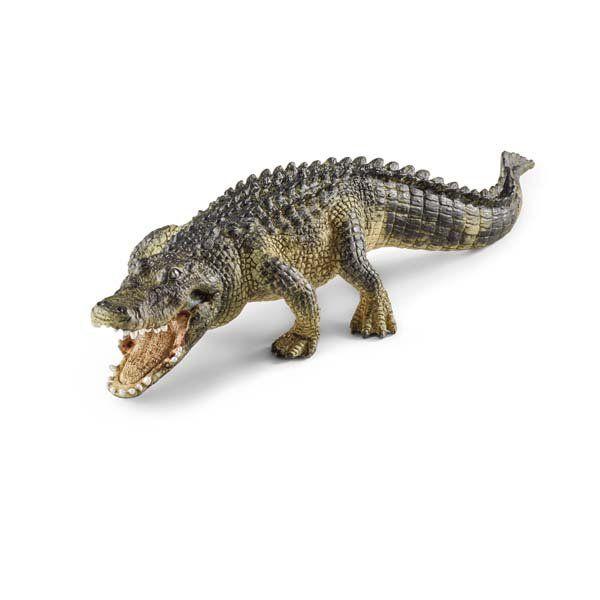 Cá sấu Châu Mỹ